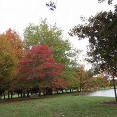 哈格雷公園用戶圖片
