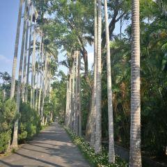 Royal Palm Blvd. User Photo