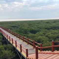 베이하이 진하이완 맹그로브 생태공원 여행 사진