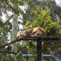 San Diego Zoo User Photo