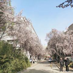 산둥대학 여행 사진