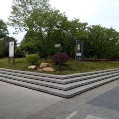 櫻花公園用戶圖片