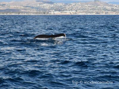Dana Wharf Whale Watching & Sportfishing