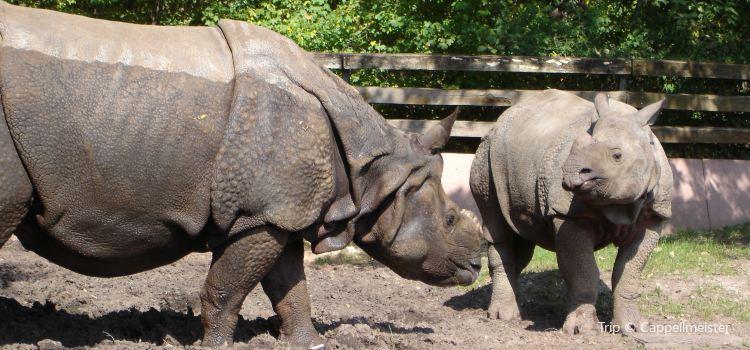 Nuremberg Zoo (Tiergarten)3