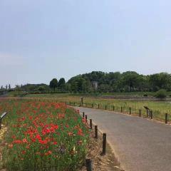 千波湖步行道用戶圖片