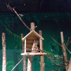馬塔塔動物王國用戶圖片