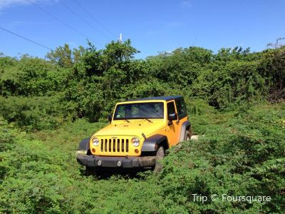 Carlos Jeep Rental