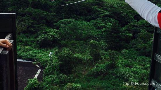 Zipline Jeju