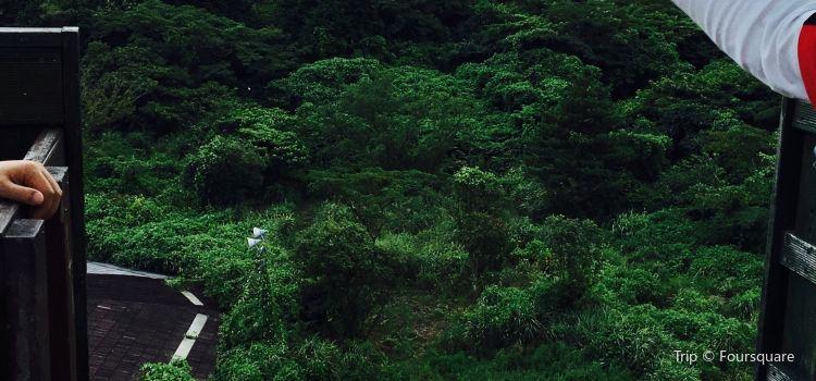 Zipline Jeju2