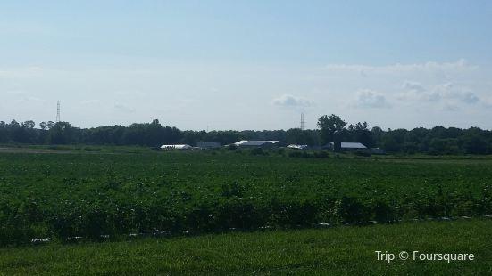 Hallock's U-Pick Farm