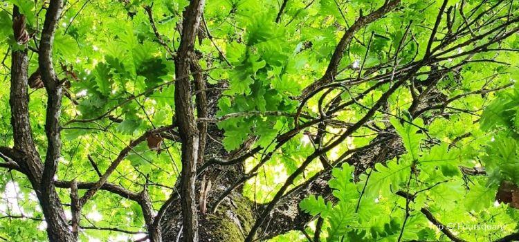 Igneada Longoz Ormanları Milli Parkı1