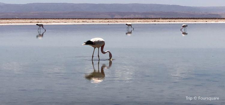 Reserva Nacional de Flamencos3