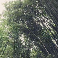 芦溝竹海のユーザー投稿写真