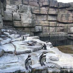 哈根貝克動物園用戶圖片