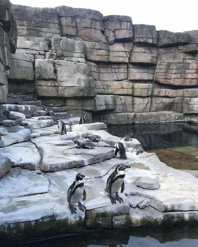 哈根貝克動物園