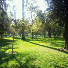 Parque Forestal User Photo