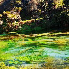 Blue Springs User Photo