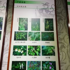 Guangdong Chinese Medicine Museum User Photo