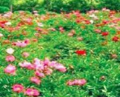 長江藥用植物園用戶圖片