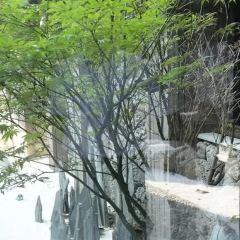 Mount Chui Tianmu Hot Spring Resort User Photo