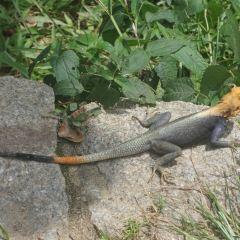 Kakum National Park User Photo