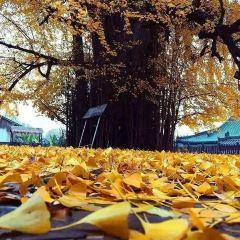 金殿公園用戶圖片
