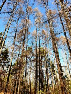 帽儿山国家森林公园-延吉-M29****6299