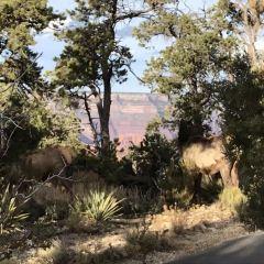 錫安國家公園用戶圖片