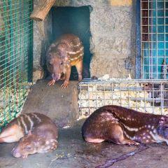 北京動物園用戶圖片