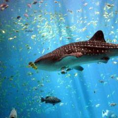 達拉斯水族館用戶圖片