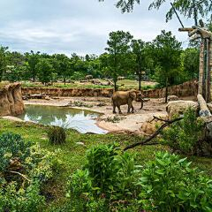 Fossil Rim Wildlife Center User Photo