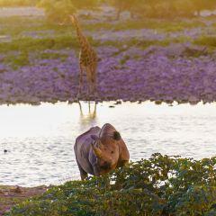 Okaukuejo Waterhole User Photo