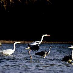 South Taihu Lake Ocean Park User Photo
