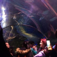 SEA LIFE 런던 수족관 여행 사진