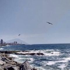 Playa de Zapallar User Photo