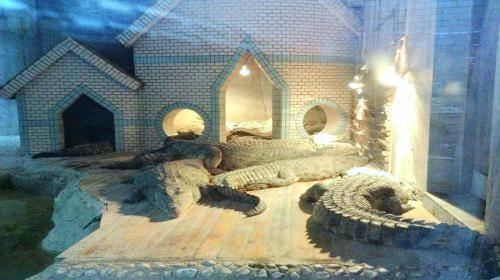 Chongqing Crocodile Breeding Center