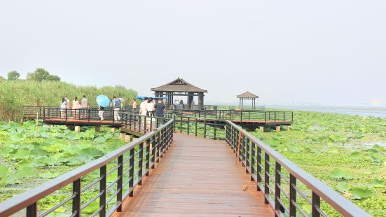 Yangcheng Lake Lotus Island