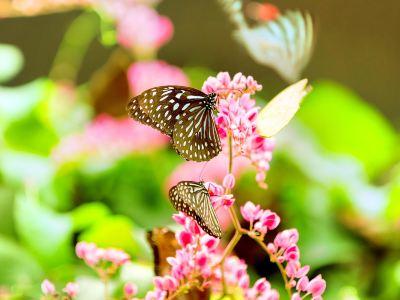 쿠알라룸푸르 나비공원
