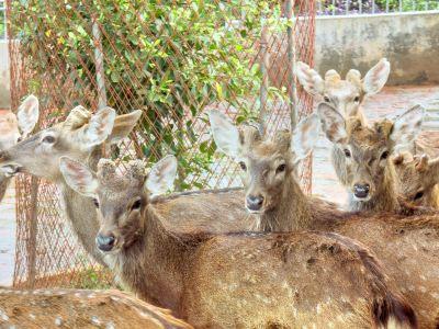 Golden Deer Garden