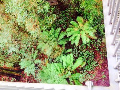 Warburton Rainforest Gallery