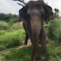霍特薩丁大象基金會1
