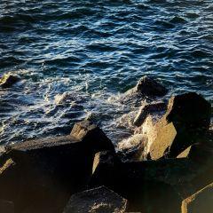 西子灣風景區用戶圖片