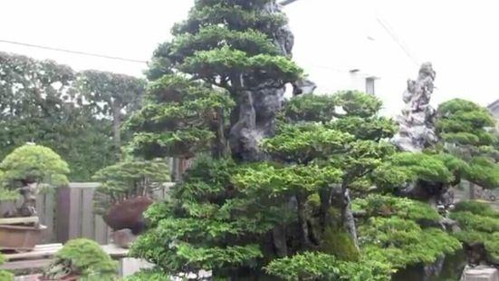 Bishopsford Bonsai Garden