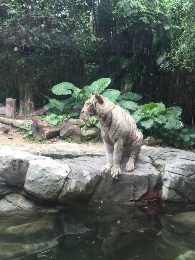 Guangzhou Chimelong Tourist Resort