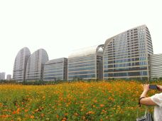 杭州国际博览中心-萧山区-小蘑菇阿咪