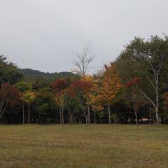 한밭수목원 여행 사진