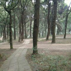七曲山風景區用戶圖片