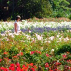 Parques Tres de Febrero User Photo