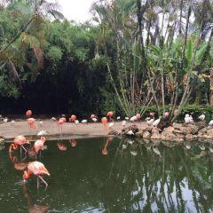 Flamingo Gardens User Photo