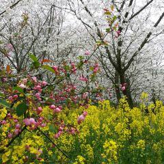 桜花谷のユーザー投稿写真